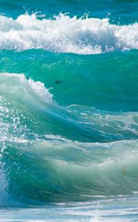 White Wave Designs